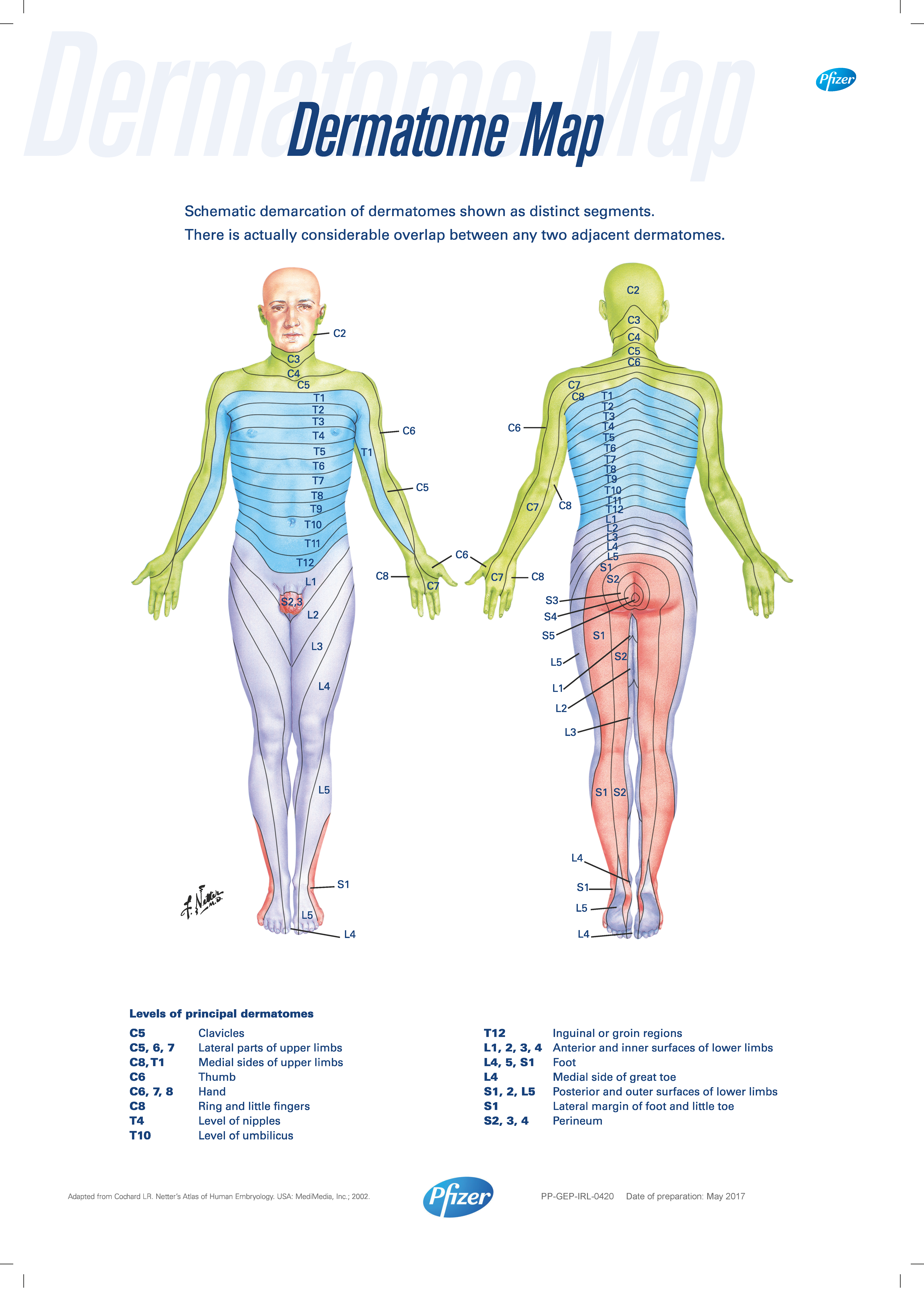 Dermatome Map | Pfizer for Professionals on